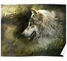 Lobo Mexicano (Mexican Gray Wolf) Poster