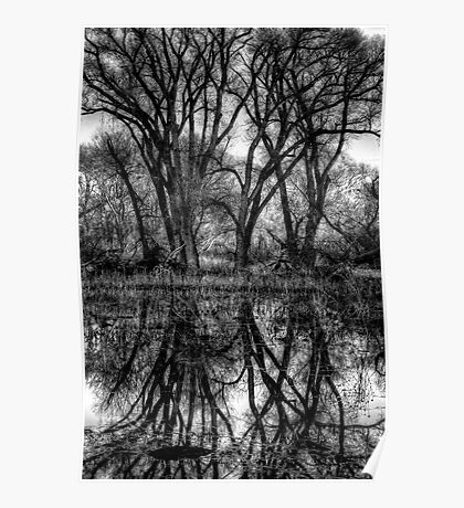 Tree Lines in Black and White Poster