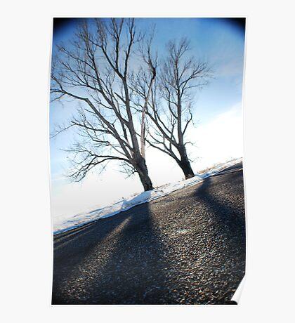 Fish-eye Winter Trees Poster