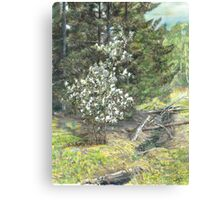 spring in the wood Canvas Print