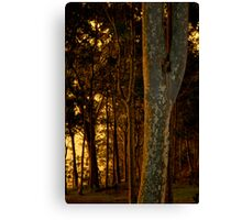 Warm light on the trees Canvas Print