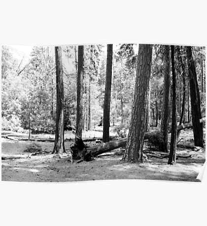 B&W Yosemite National Park forest landscape photography. Poster