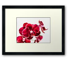 Red Wonder Framed Print