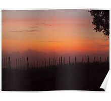 sunrise over the vines Poster