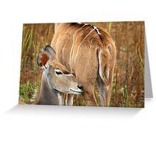 Werribee Zoo Greeting Card
