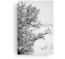 Stark Cold Canvas Print