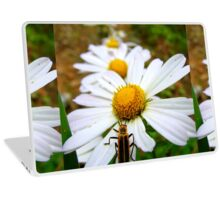 Marguerite Daisies and a Margined Leatherwing  Laptop Skin