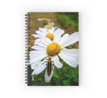 Marguerite Daisies and a Margined Leatherwing  Spiral Notebook