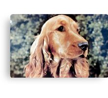 Ollie the Red Setter Canvas Print