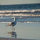 Lonely Gull by Grant Scollay