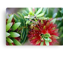 Waspy Bottle Brush Canvas Print