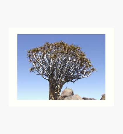 Quiver tree and friend... Art Print