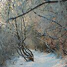 kingdom of winter and frozen by Patrycja Makowska
