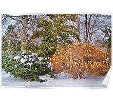 amazing winter Poster