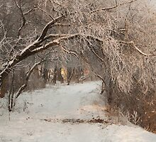 kingdom of  frozen by Patrycja Makowska