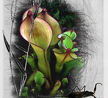 Pond life2 by Susan Ringler