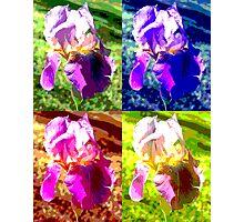 Colorized Iris Photographic Print