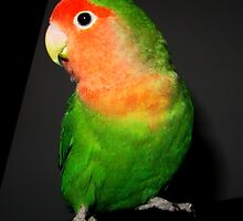 Cute Lovebird by Mellebel