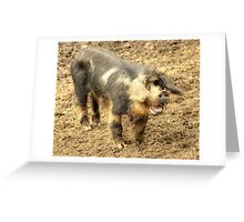Ernie, The Incredibly Hairy Laughing Pig Greeting Card