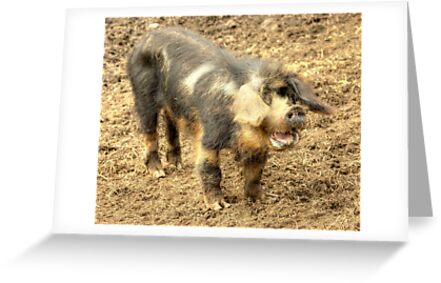Ernie, The Incredibly Hairy Laughing Pig by Jamie  Green