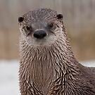 Otter Love by Wanda Dumas