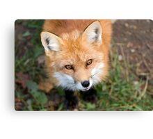 Friendly Fox Canvas Print