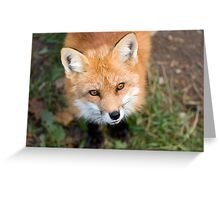 Friendly Fox Greeting Card