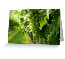 Vineyard View   ^ Greeting Card