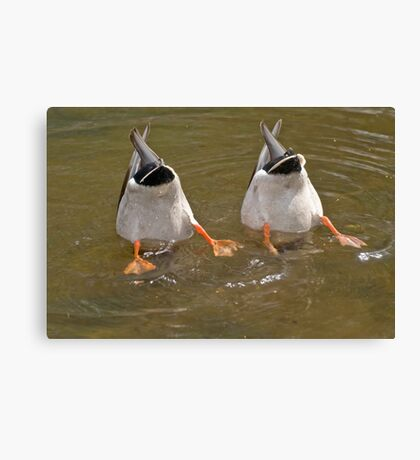 Synchronized Diving Canvas Print