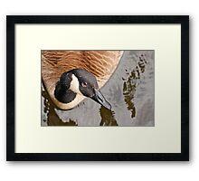 Canada Goose Eh! Framed Print