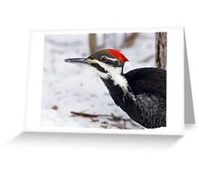 Snow Walking Pileated Woodpecker  Greeting Card