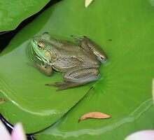 Frog on lily pad by leoparddesigns