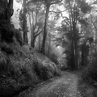 Deep Within the Wood by Richard Mason