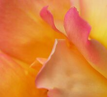 Petals by Heather Thorsen
