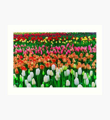 Woodland Tulip Field, Wa Art Print