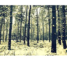 Winter Woods - Allerthorpe Woods Photographic Print