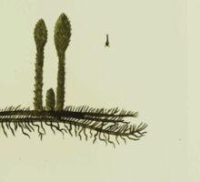 Plantarum Indigenarum et Exoticarum - Lukas Hochenleitter und Kompagnie 1788 - 221 Sticker