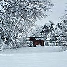 Horse In The Snow by Glenna Walker