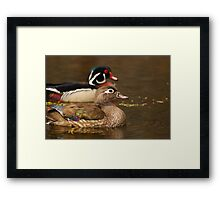 Wood Duck Courtship Framed Print