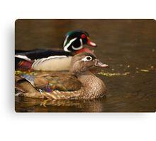 Wood Duck Courtship Canvas Print