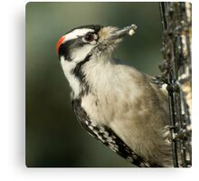 At the Feeder  Canvas Print