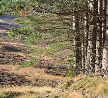 Pitlochry, FIfe, Scotland by 118b