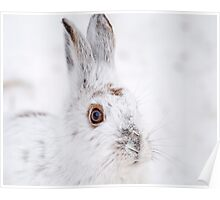 Winter Hare Poster