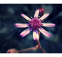 Shining Flower  Photographic Print