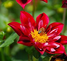 Pollination by John Schneider
