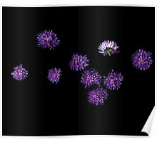 Chives Blossoms Poster
