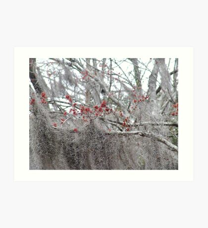 Maple Tree Buds and Spanish Moss Art Print