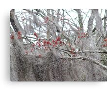 Maple Tree Buds and Spanish Moss Canvas Print