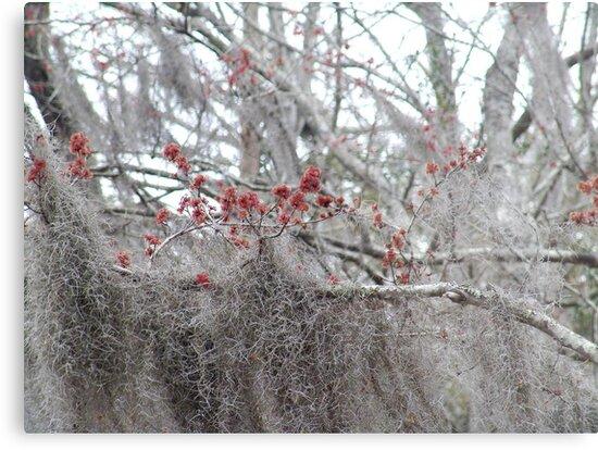 Maple Tree Buds and Spanish Moss by May Lattanzio