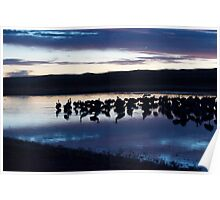 Late night at Bosque del Apache Poster